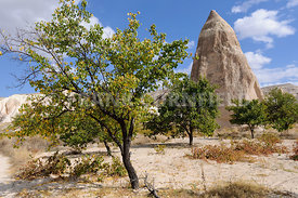Rock formation and olive tree cappadocia.
