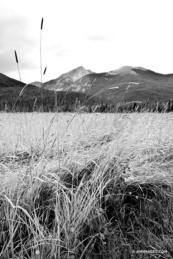 MEADOW COYOTE VALLEY TRAIL KAWUNEECHE VALLEY ROCKY MOUNTAIN NATIONAL PARK COLORADO BLACK AND WHITE