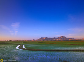 Rice Fields & Buttes