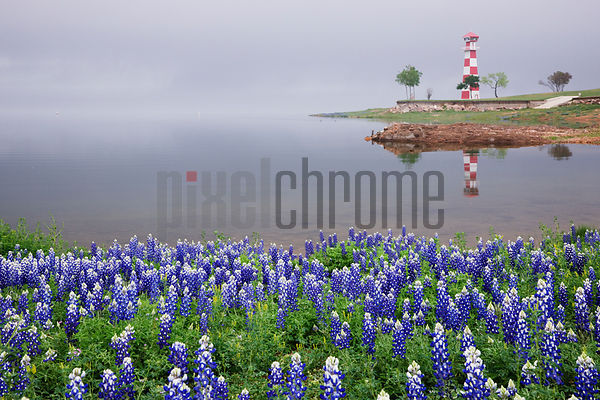 Blue Bonnets on a Beach with Lighthouse