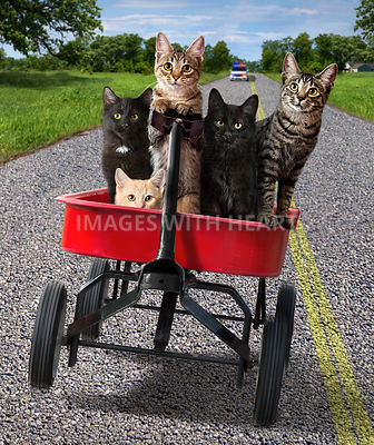 kittens escaping in a wagon