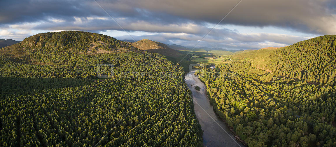 River Dee flowing through Scots pine (Pinus sylvestris) forest in morning light, Deeside, Cairngorms National Park, Scotland,...
