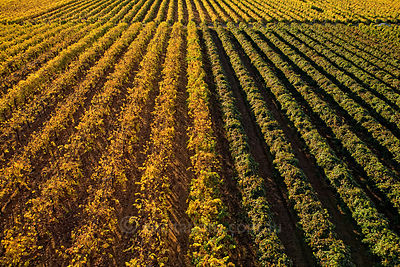 Aerial photography of vineyard, Australia