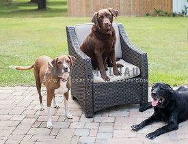 3 dogs on paved area with chair