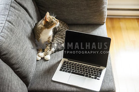 Cat chilling on the couch next to a laptop computer