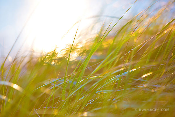 CAPE COD AUTUMN GRASSES NATURE ABSTRACT COLOR