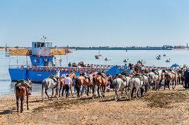 Horses to be loaded on ferry at Sanlucar de Barrameda