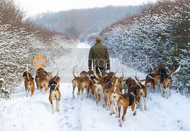 Whip George Pierce with the Belvoir Hounds - The Belvoir Hunt on foot in Stathern 22/1/13