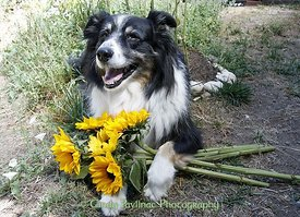 Merlin Offers Sunflowers