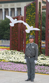 White Doves used in flower display as part of 2008 Beijing Olympics in Tianeman Square  Beijing China September 2008