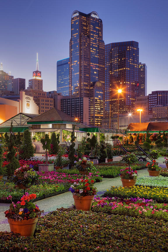 Flower market with skyscrapers in the background, Dallas, Texas, USA