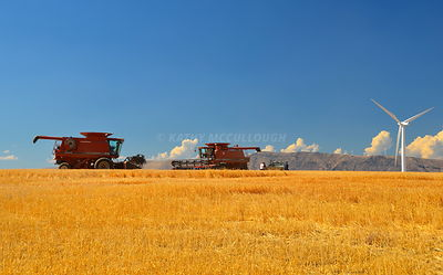 Case IH combines during harvest