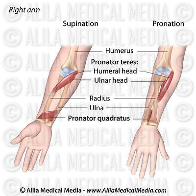 Pronation of forearm