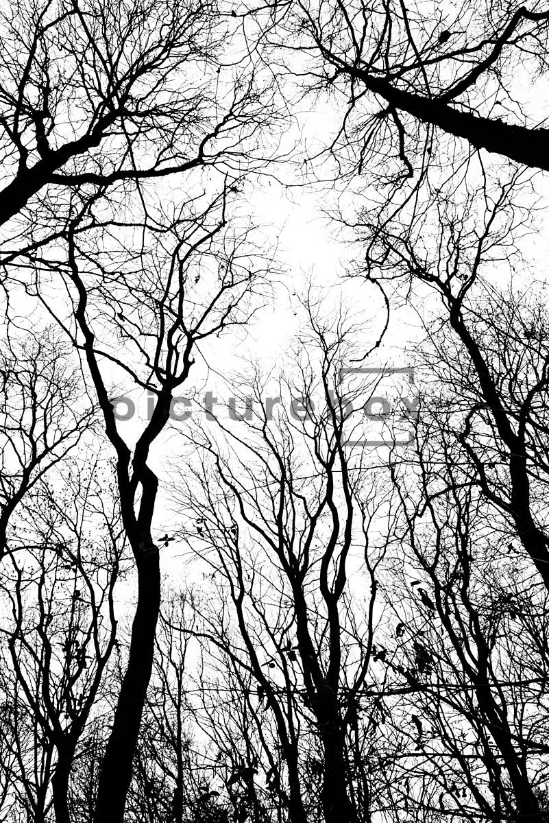An abstract image of bare trees in winter, against a white sky.