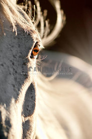 Close up of eye and side of horse head with selective focus on eye