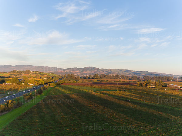 Aerial view of highway against vineyards