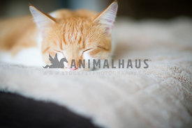 Orange and white cat sleeping on couch