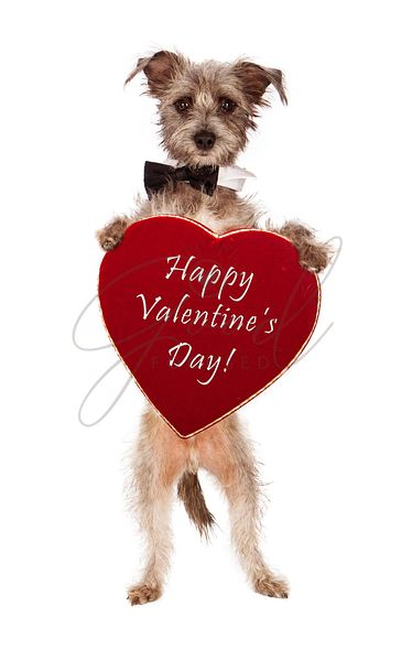 Terrier Dog Holding Valentines Day Heart