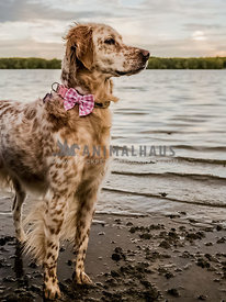 English setter side profile looking into sunset over lake