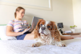 Dog on a bed with a girl on a laptop in the background