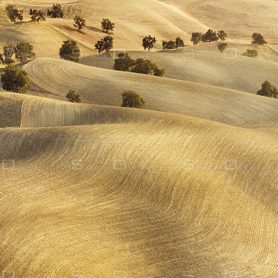 Rolling Hills near Paso Robles California
