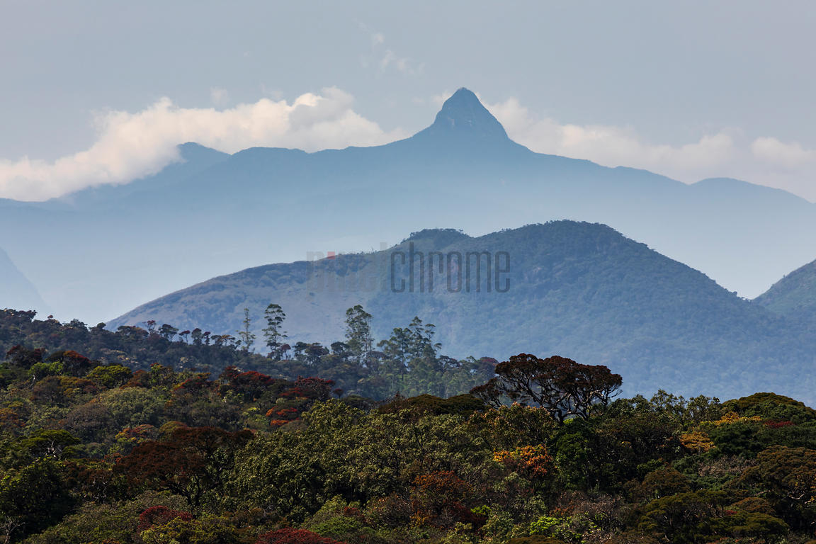 Distant View of Adam's Peak and Montaigne Forest from Horton Plains