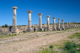 Columns of the Gordien Palace on the Decumanus, Volubilis, Morocco; Landscape