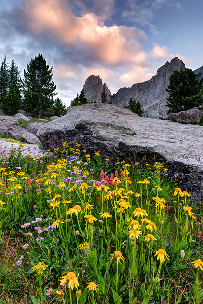 Towering Wildflowers