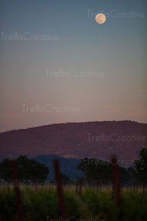 The full moon high in the sky over a mountain vineyard at twilight