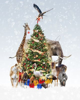 Zoo Animals Decorating Christmas Tree in Snow