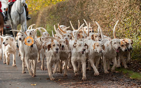 Cottesmore hounds - Cottesmore Hunt Opening Meet, 30/10/12