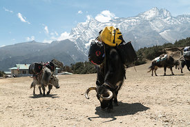 160503-MAMMUT_project360_Everest-0014-Matthias_Taugwalder