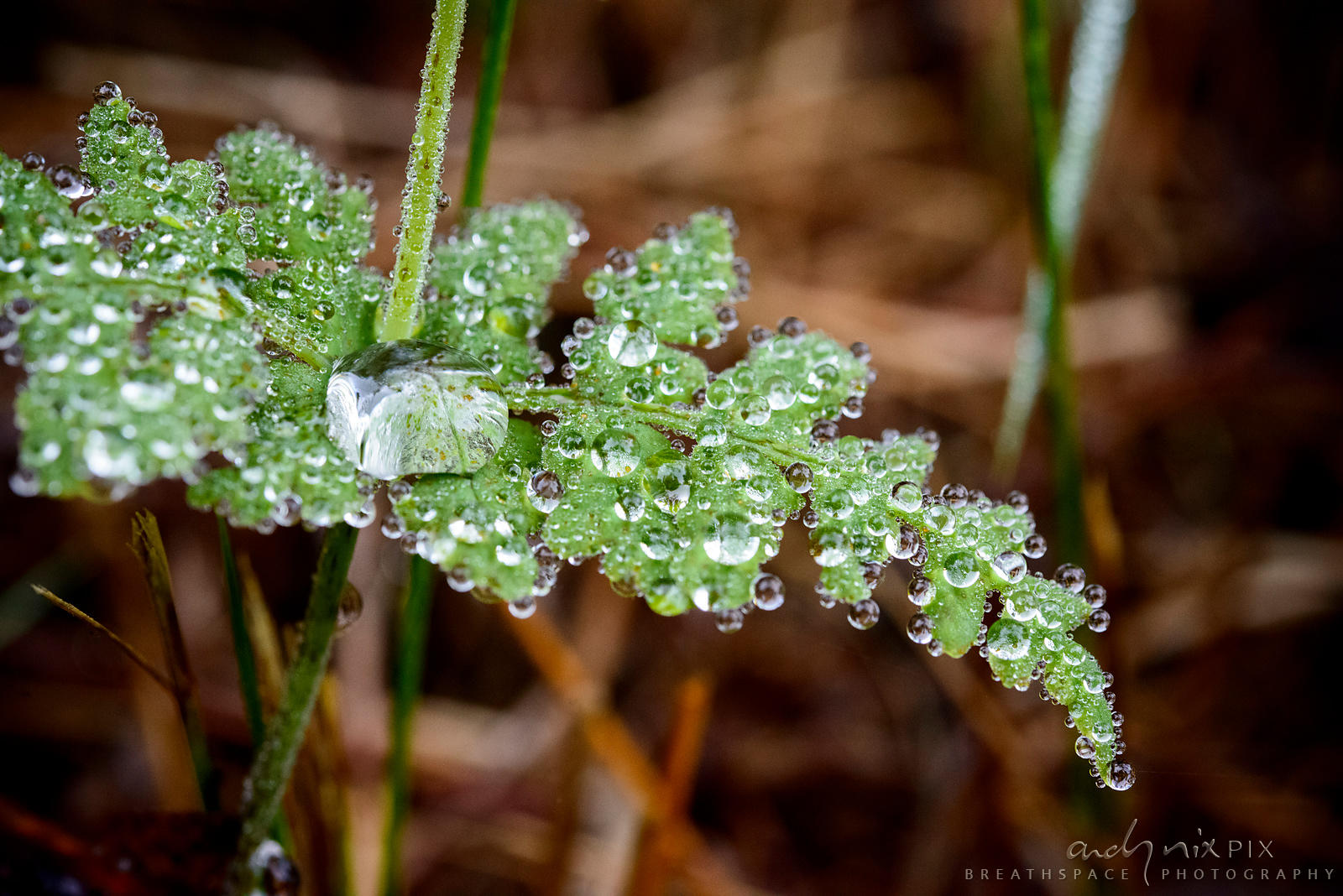 Macro close-up of dew on ferns
