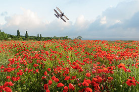 Gladiator over poppy field
