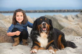 Little Girl Sitting On Beach with Her Bernese Mountain Dog