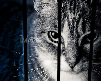 Cat Photo - Caged