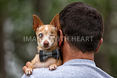 Blind chihuahua in man's arms