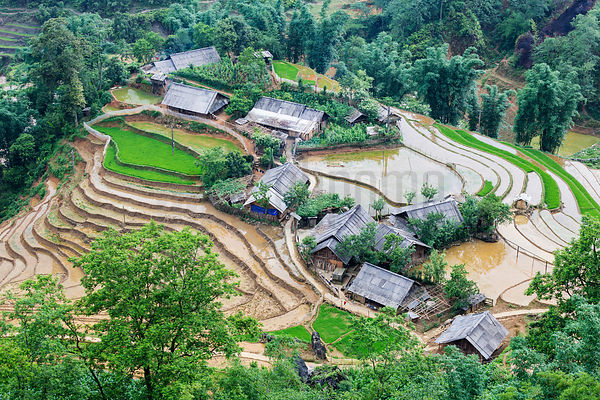 Rice Paddies and Homes