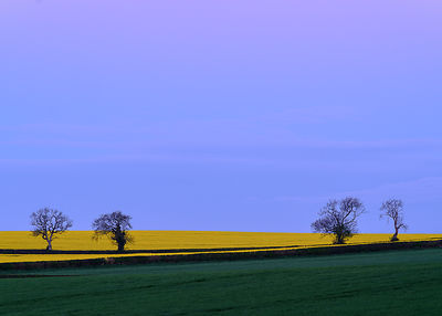 Four_oak_trees_-_Dorset