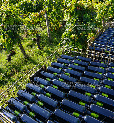 The bottling of wine in wineyard-Storage of wine bottles outdoor