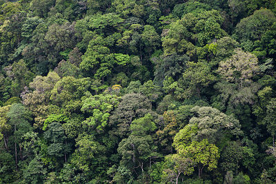 Tropical cloud rainforest,  Bosque de Protection del Alto Mayo, Peru.