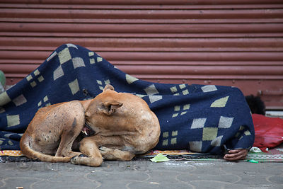 A stray dog sleeps next to a homeless woman and child on a sidewalk in Shyambazar, Kolkata, India.