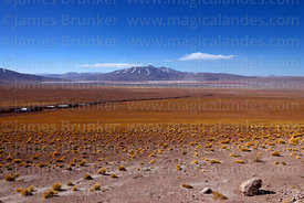 View looking north across high altitude puna grassland towards Laguna Colorada and Cerro Chijlla volcano, Eduardo Avaroa Ande...