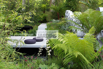 Contemporary garden, Digital, Terrace, Tree Fern, Tropical garden, Contemporary Terrace