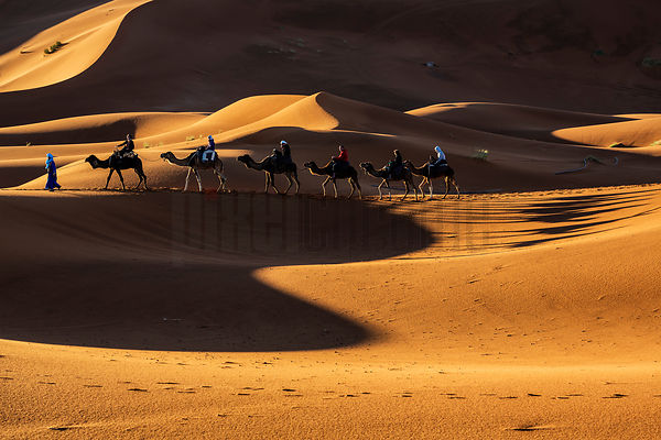 Tourist Riding on Camels in the Dunes of Western Sahara at Dawn
