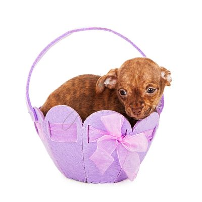 Puppy in an easter Easter basket
