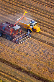 Aerial View of Rice Harvest #60