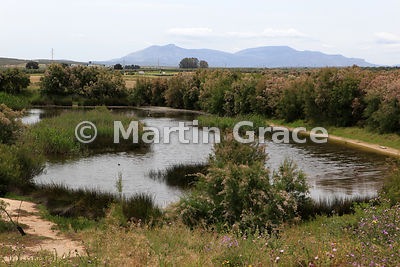 Lagoon at the Fuente de Piedra Natural Reserve (Reserva Natural), Andalusia, Spain