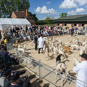Cottesmore Hunt Young Entry (Puppy Show) 10/6/14