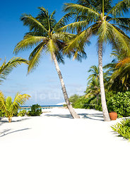 An image of palm trees on a tropical white sandy beach in the Maldives.